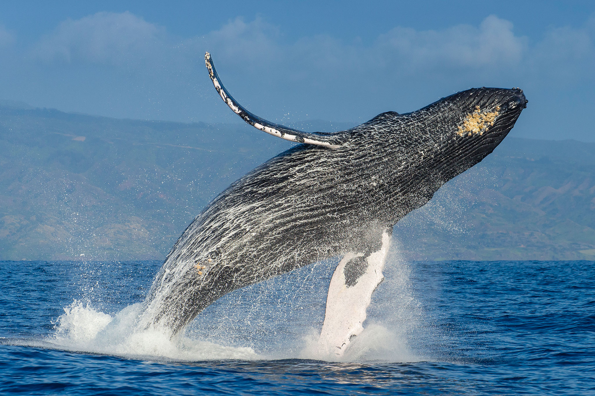 BTC Whales Moved Thousands During The Latest Weekend Crash
